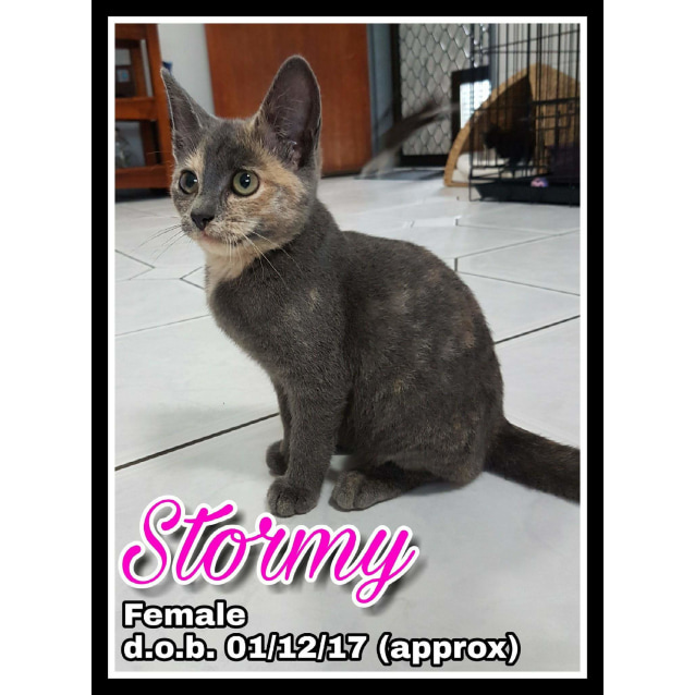 Photo of Stormy