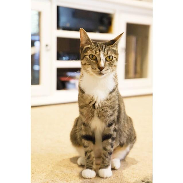 Photo of Vera *•Adopt Me•* Adoption Fee Reduced.