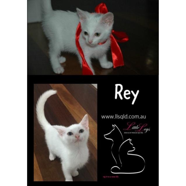 Photo of Rey