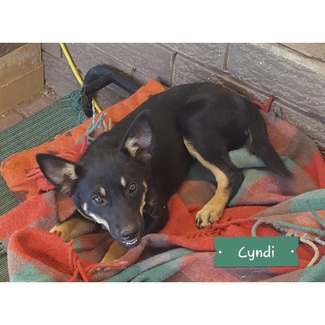 Photo of Cyndi