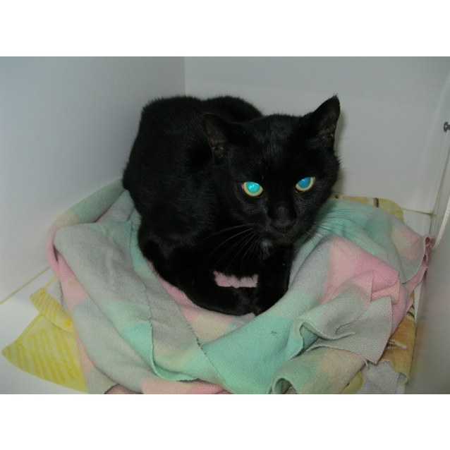 Photo of Puss 2/ Murmurs