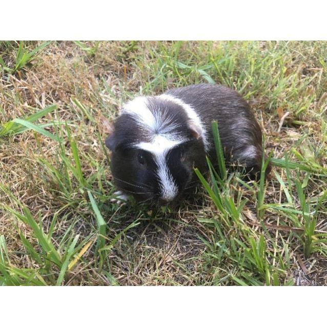 Photo of Herbert