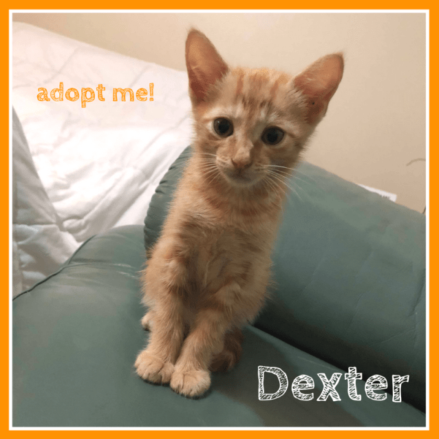 Photo of Dexter ~ Kitten (On Trial 23 3 2018)