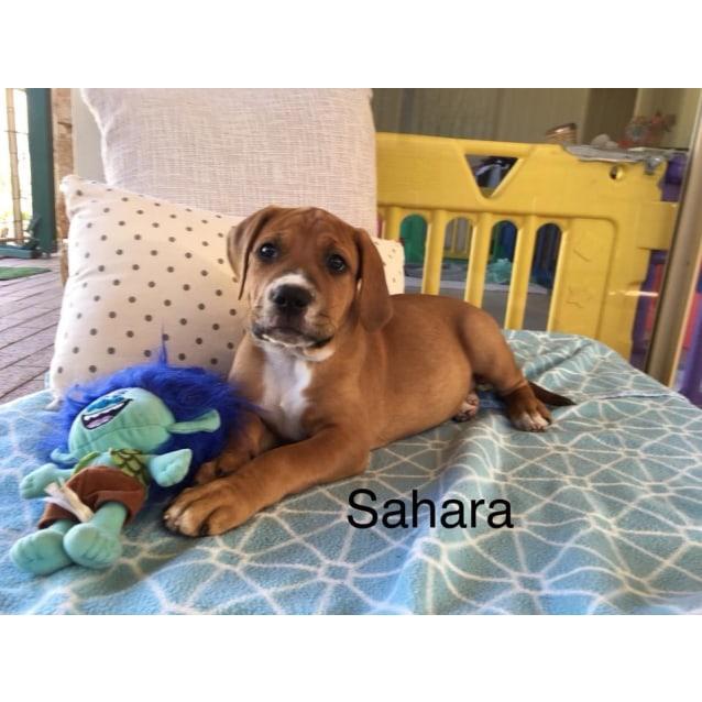Photo of Sahara With Kirsty