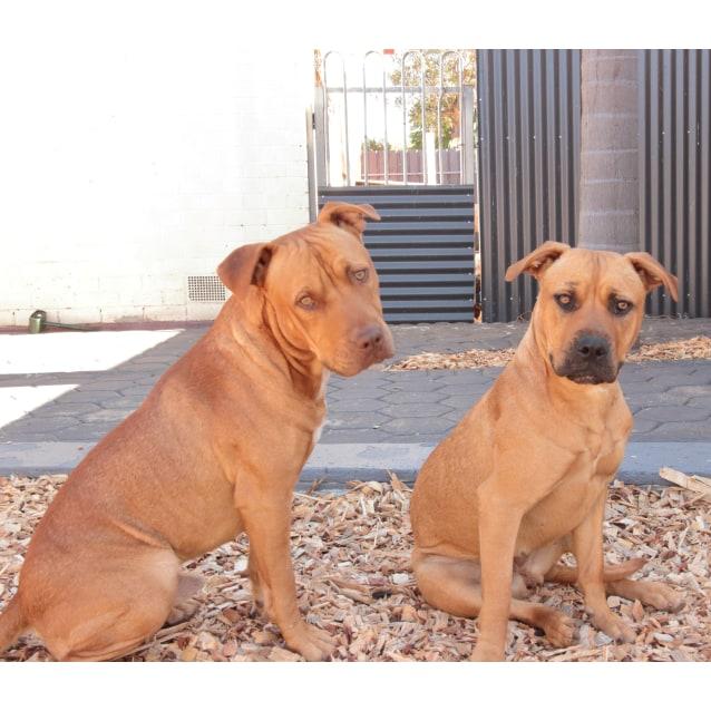 Photo of Bailey & Tank