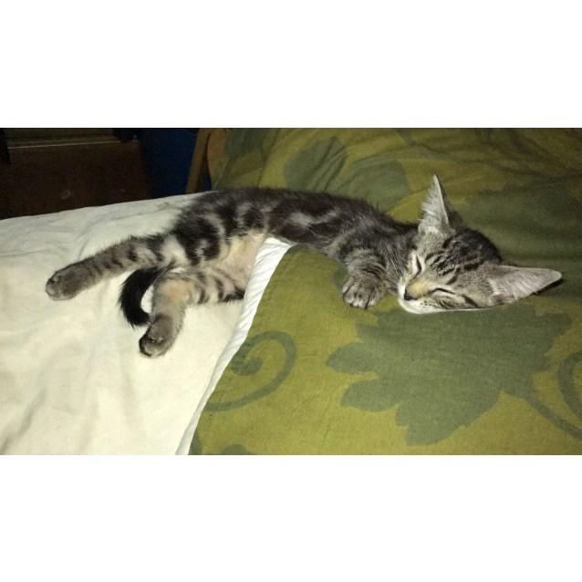 Photo of Gremlin & Dobby