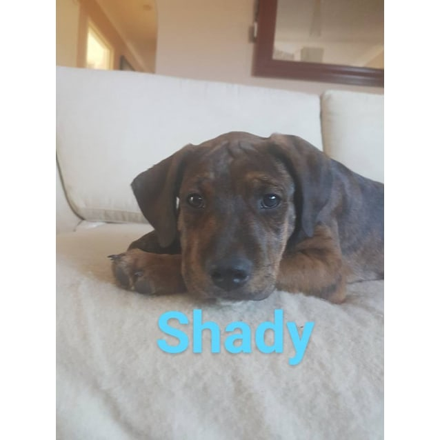 Photo of Shady With Amy