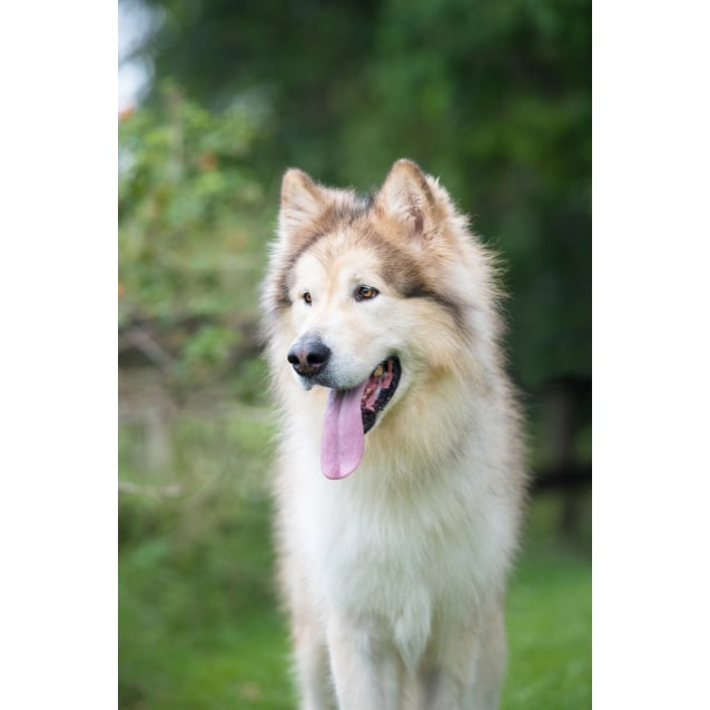 Photo of Lycan