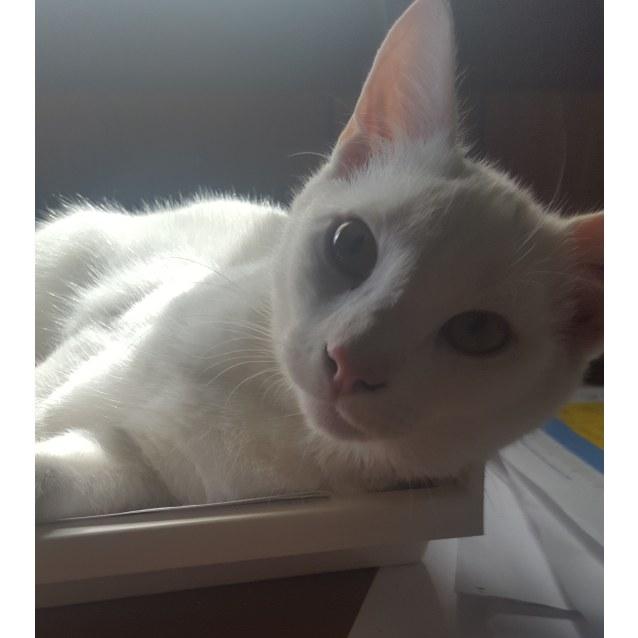 Photo of Casper And Spook