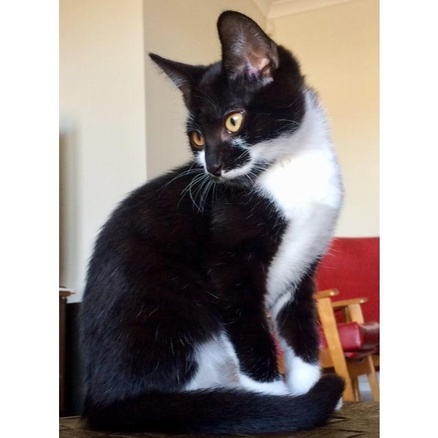 Photo of James Bond The Dog Lovin' Kitten!