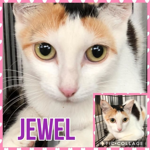 Photo of Jewel
