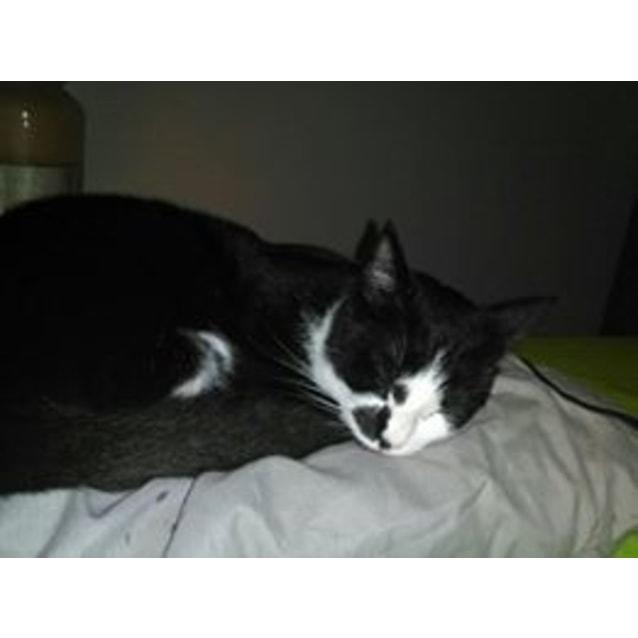 Photo of Tillie