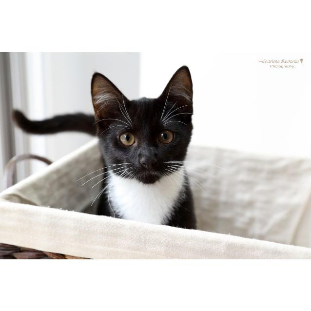 Photo of Ocky