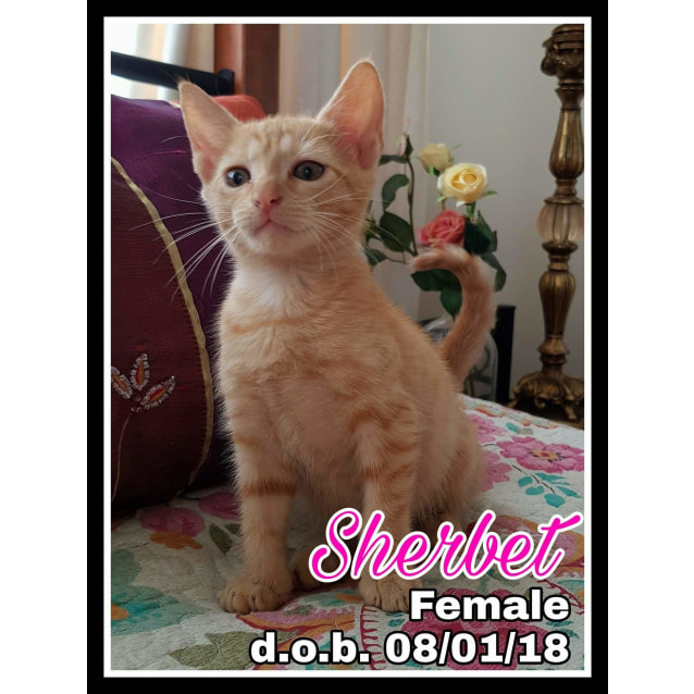 Photo of Sherbet