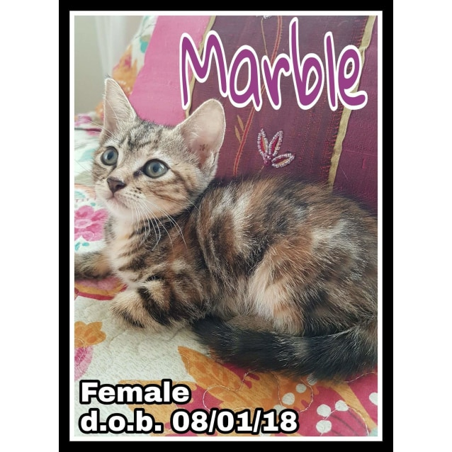 Photo of Marble