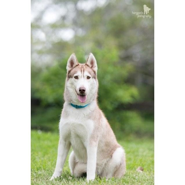 Photo of Coolio