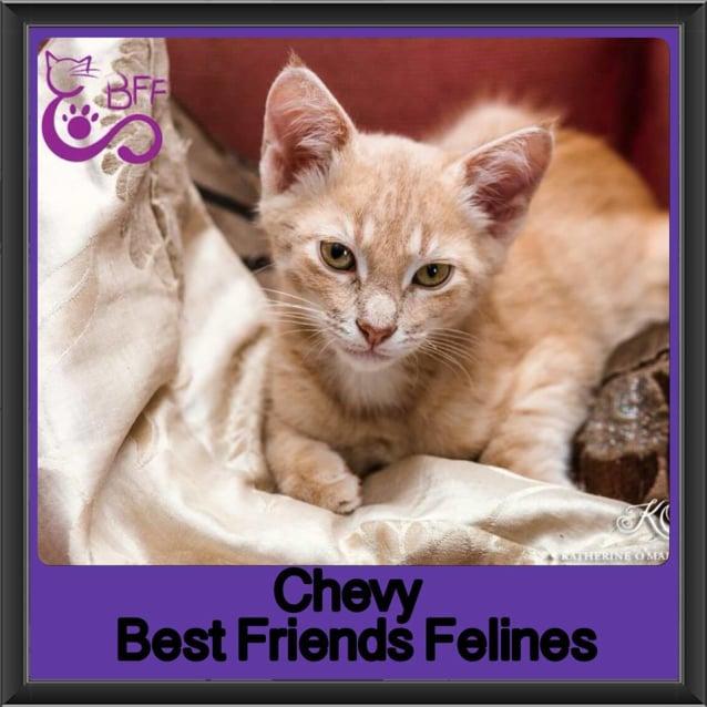 Photo of Chevy