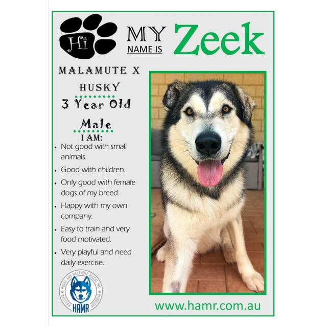 Photo of Zeek