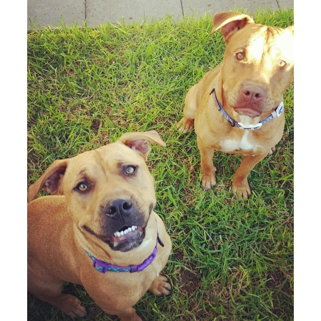 Photo of Bailey & Tank **On Trial**