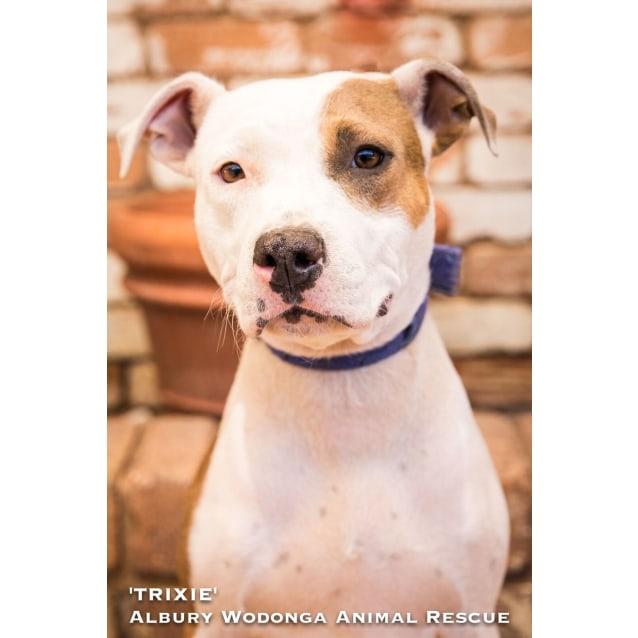 Photo of Trixie