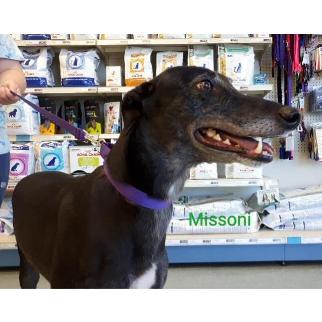 Photo of Missi
