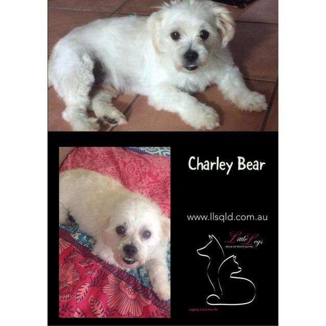 Photo of Charley Bear