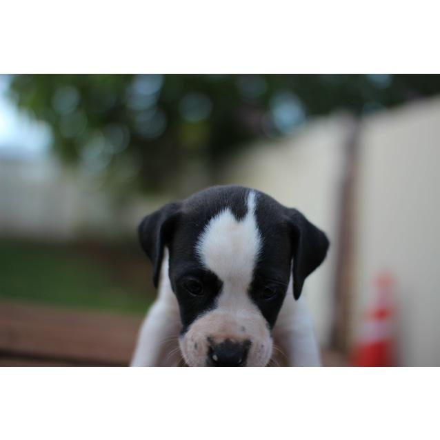 Photo of Ripley