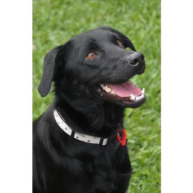 Photo of Cheyenne