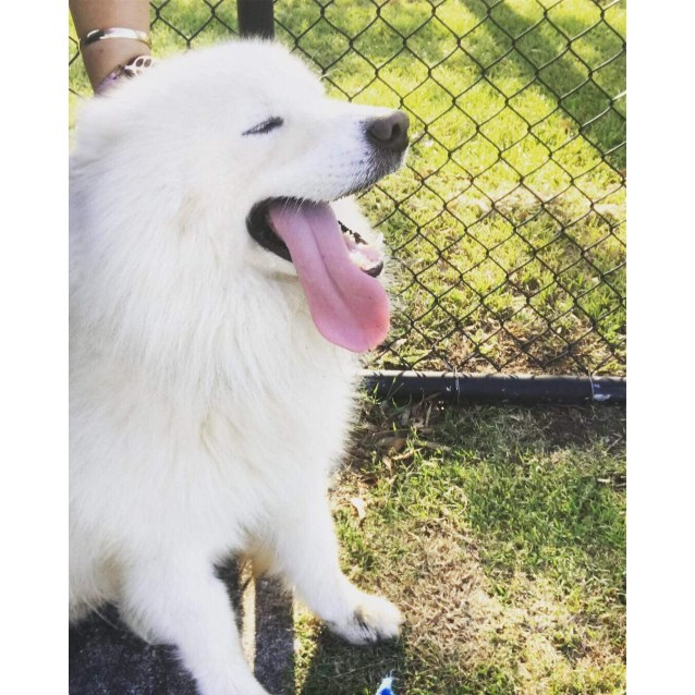 Photo of Hunter (Adoption Pending)