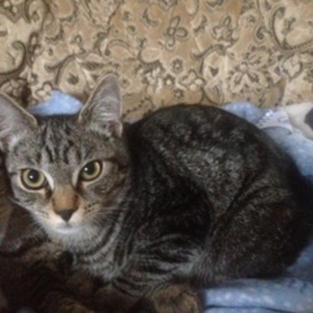 Photo of Louie (Located In Pakenham)