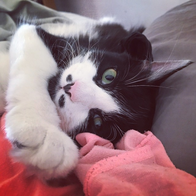 Photo of Panda  Adoption Fee $50