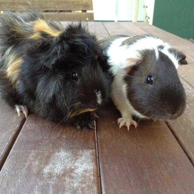 Photo of Armaretto And Brandy
