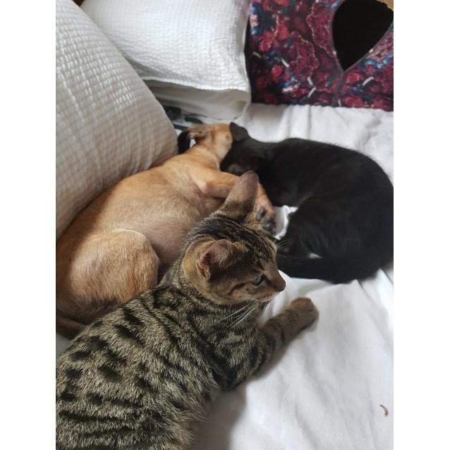 Photo of Gloria, Gerrard & Mitsy