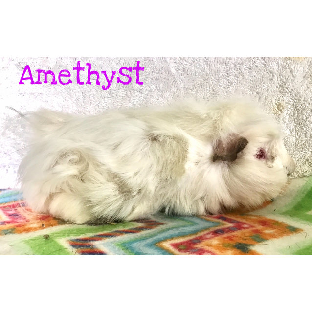 Photo of Amethyst