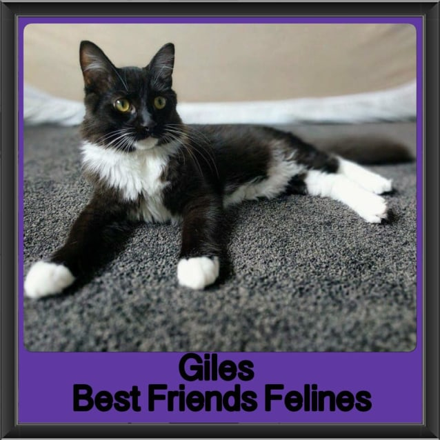 Photo of Giles