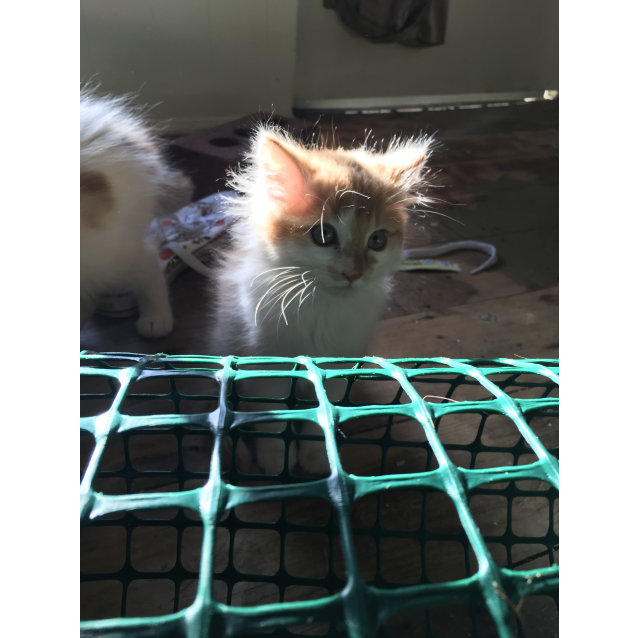 Photo of Lil Fuzzy (Located In Footscray)