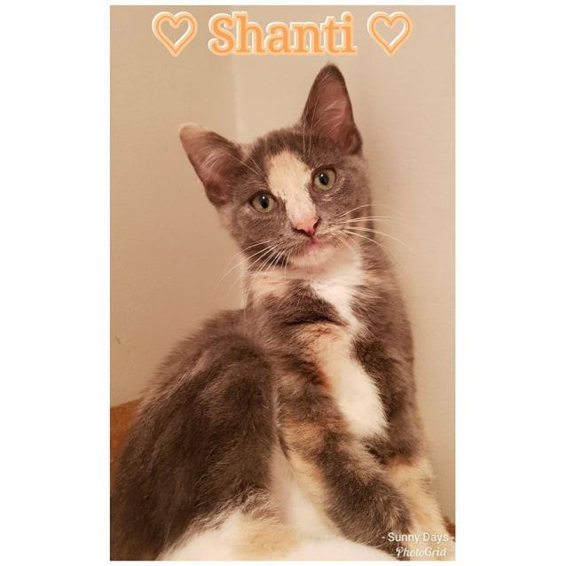 Photo of Sassy Shanti