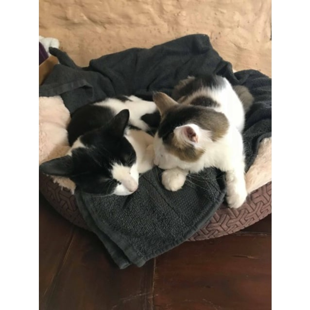 Photo of Felix And Oscar