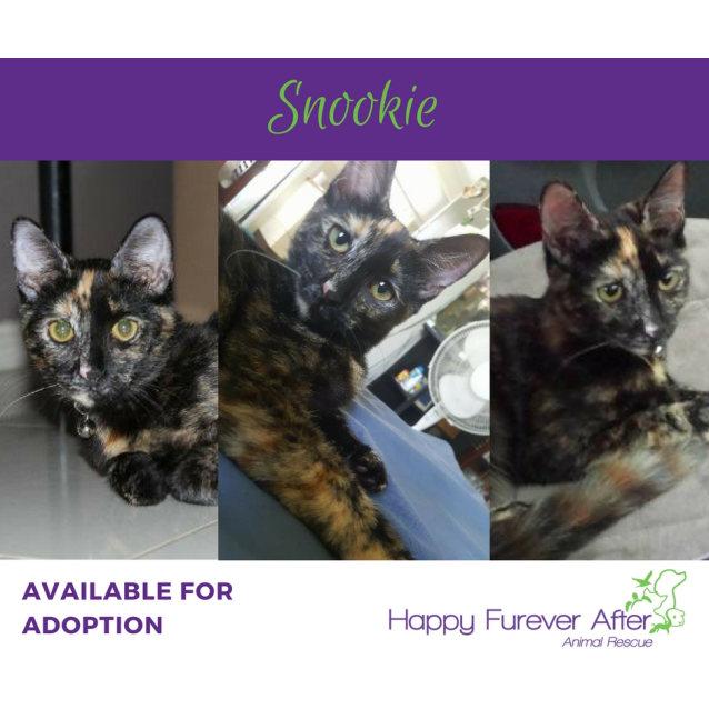Photo of Snookie