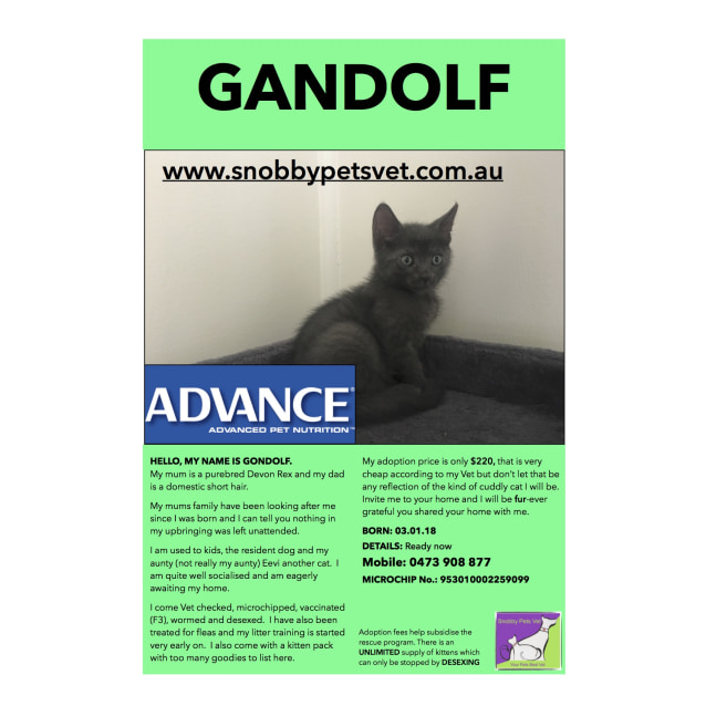 Photo of Gandolf