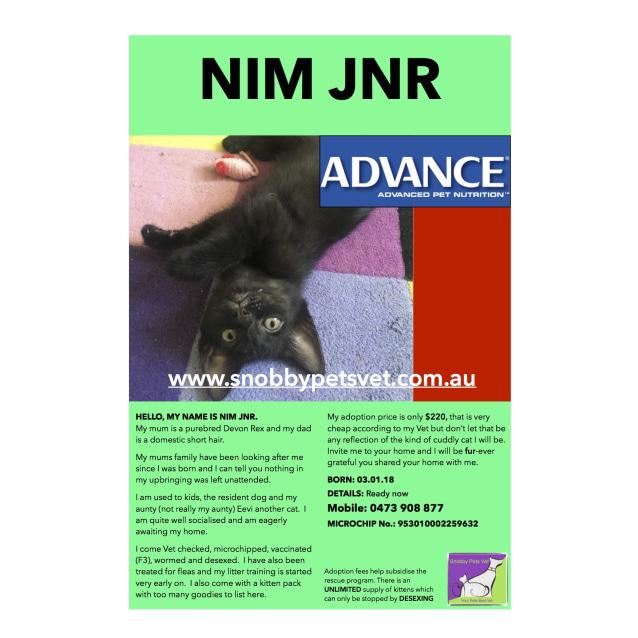 Photo of Nim Jnr