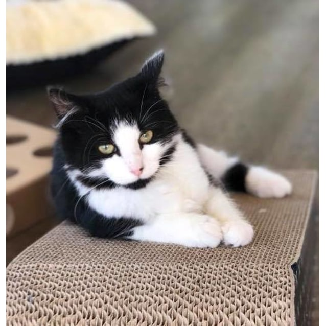 Photo of Maggy **2nd Chance Cat Rescue**