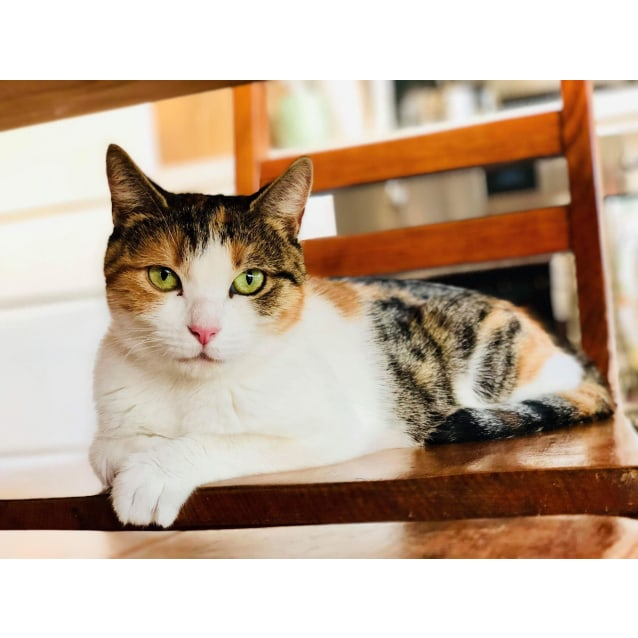 Photo of Mia (Located In Brunswick East)