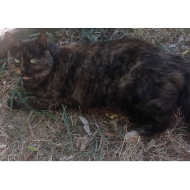 Photo of Rosi (Located In Pakenham)