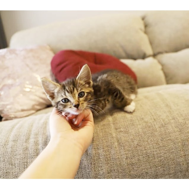 Photo of Dj Suki *Adopt Me*