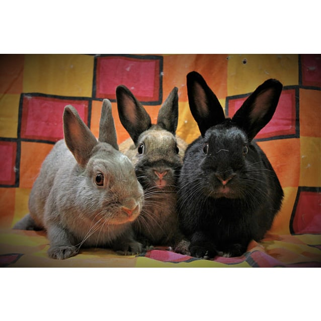 Photo of Violet, Pumpkin And Sooty
