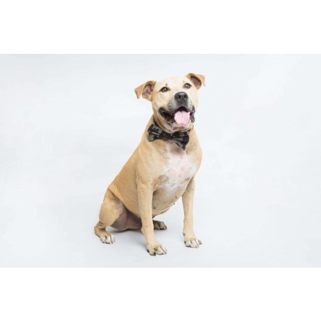 Photo of Louie *$199 Easter Adoption Fee*
