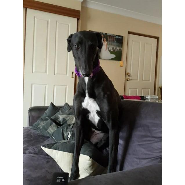 Photo of Sasha **On Trial**