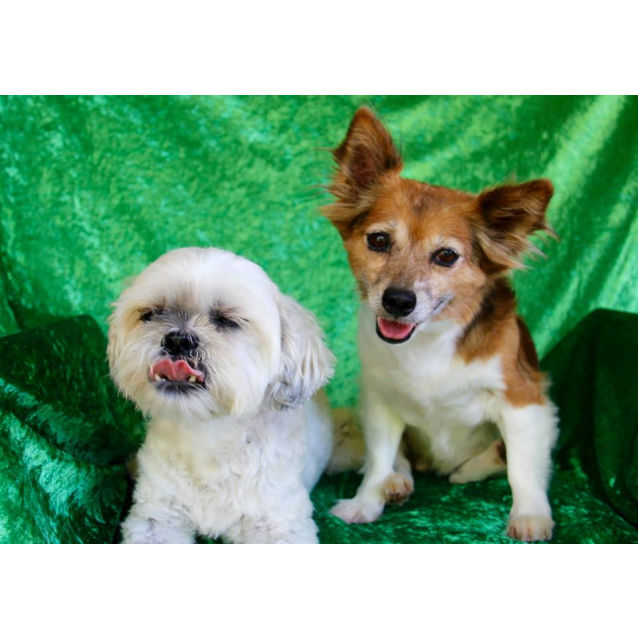 Photo of Barney And Charlie