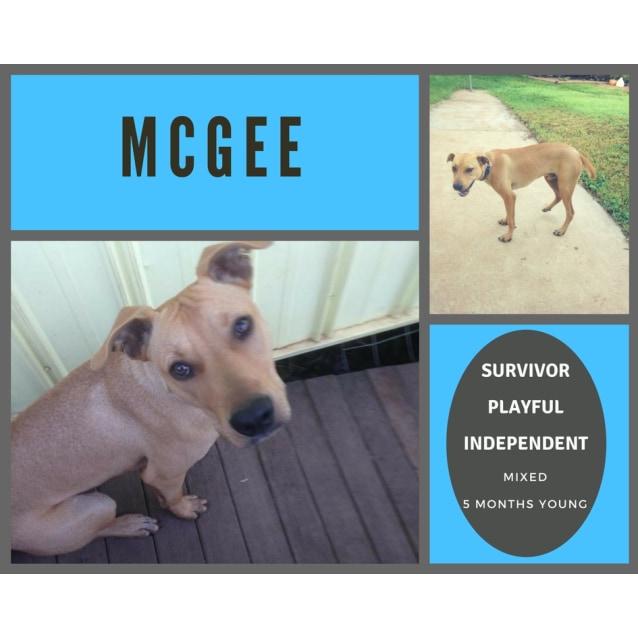Photo of Mc Gee